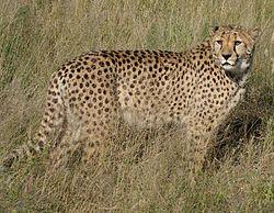 もしも人間と同じ大きさだったら...100m走が最速の生き物は何だ!?
